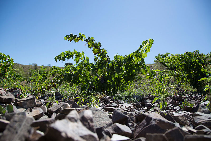 Bodegas Breca-photo